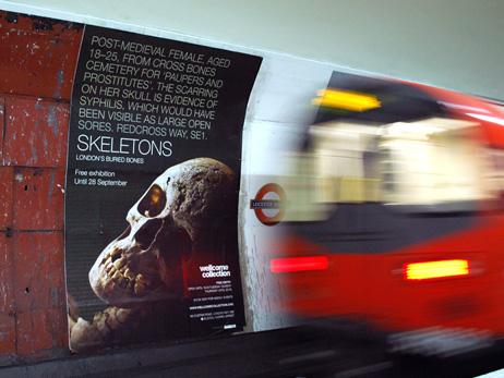 cognight_skeletons2