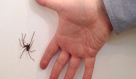 29-Jul-giant_spider_web
