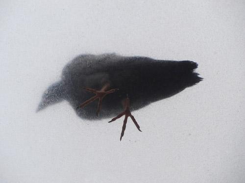 10_Dec_14_Pigeon