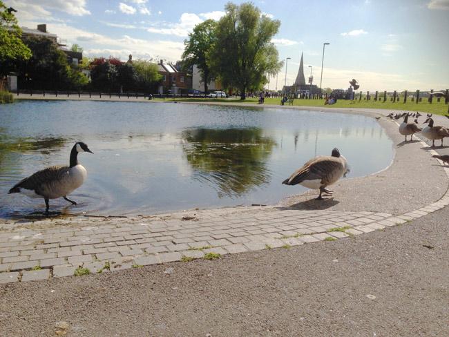 Blackheath Pond