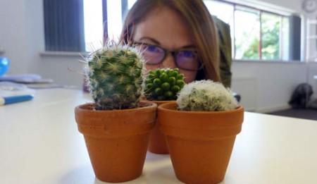 18_Jun15_cacti