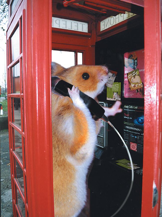 Trouble_phonebox