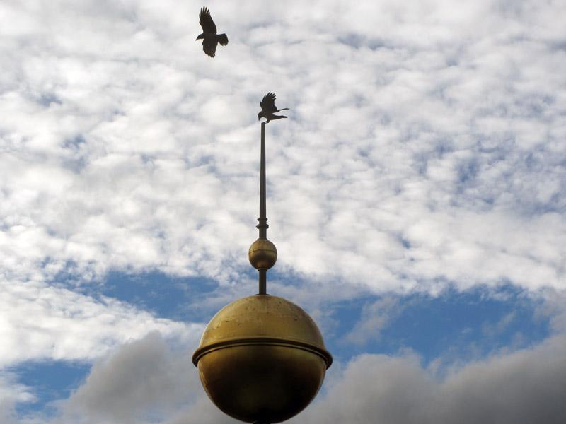 Berlin_dome_birds