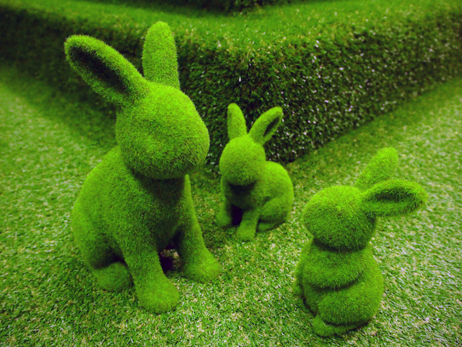 02_Mar_17_rabbits_