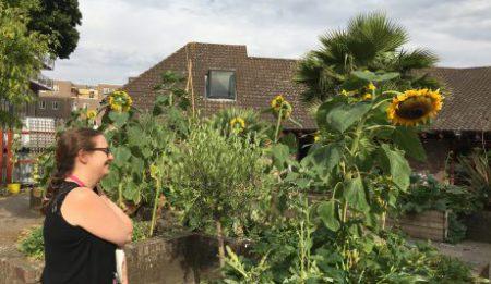 16_Jul_18_Albany-garden-460x345