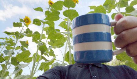 10_Aug_20_Sunflowers