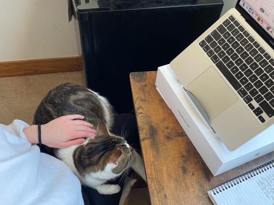 16_Apr_21_Henry_cat
